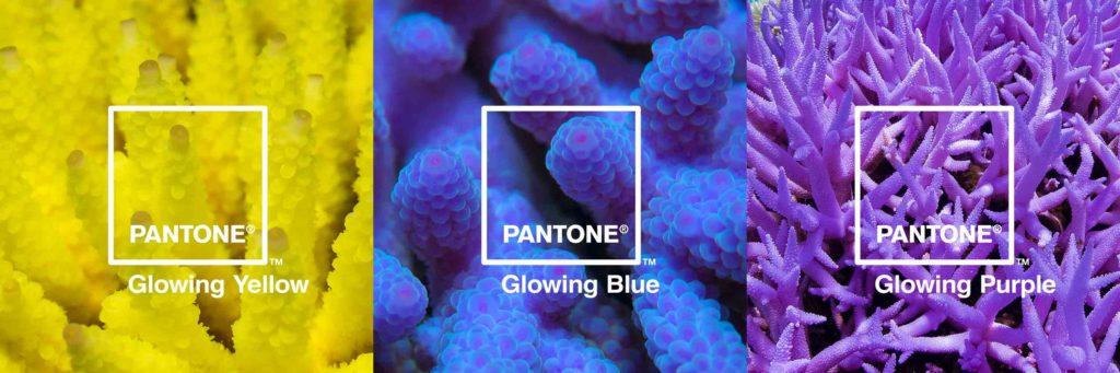 GlowingYellow、GlowingBlue、GlowingPurple